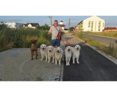 Dresaj canin la domiciliul clientului  Timisoara